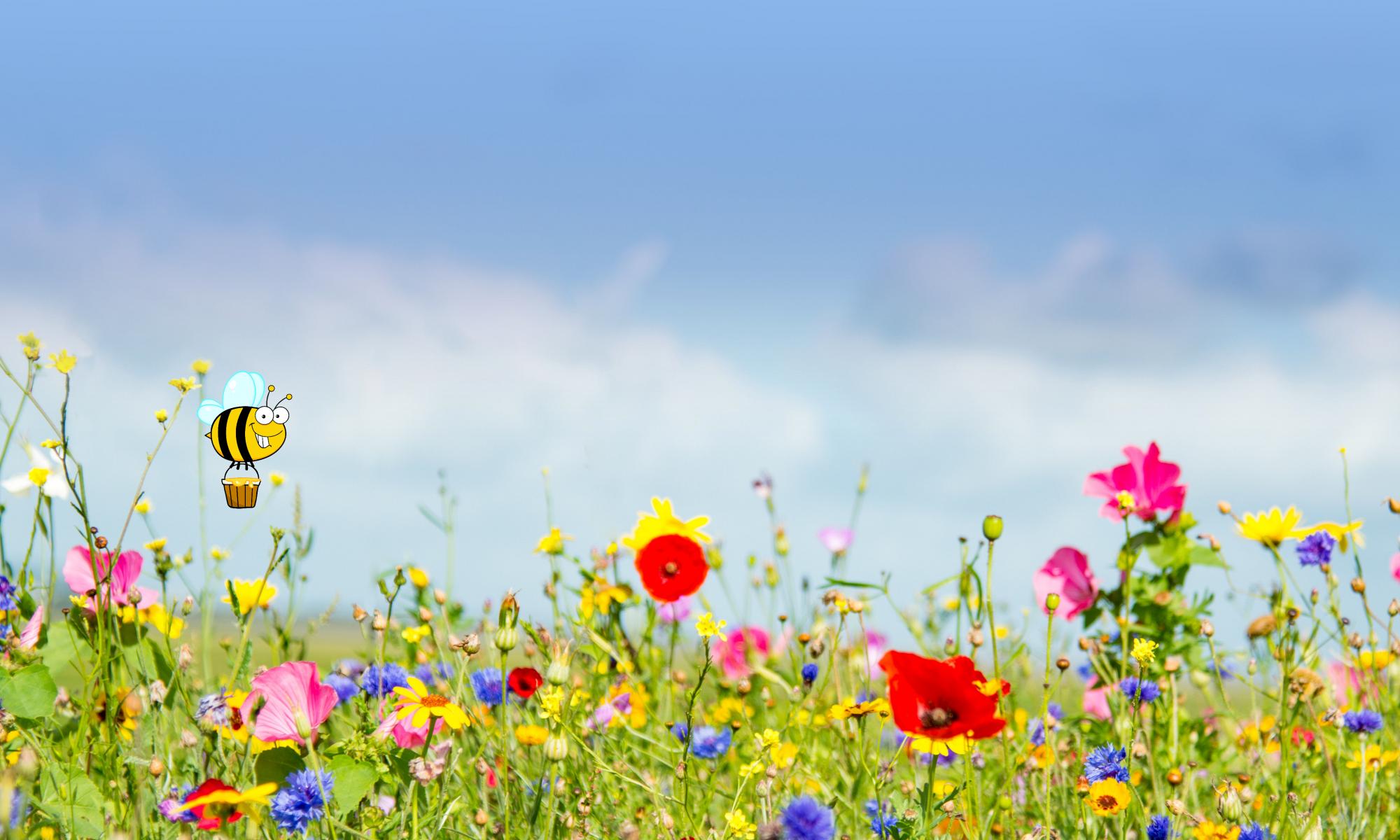 Insektenwiese am EU-Mittelpunkt